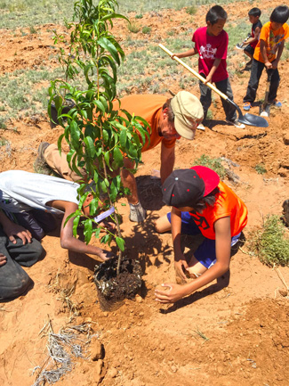 Hopi Orchard-Garden and Food Sustainability Projects