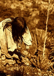 Historical photo of Mescal harvest by an Apache woman.